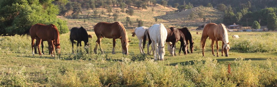 Horses lined up outside chewing on grass. Rankin Ranch is one of the best Fall vacations in the US