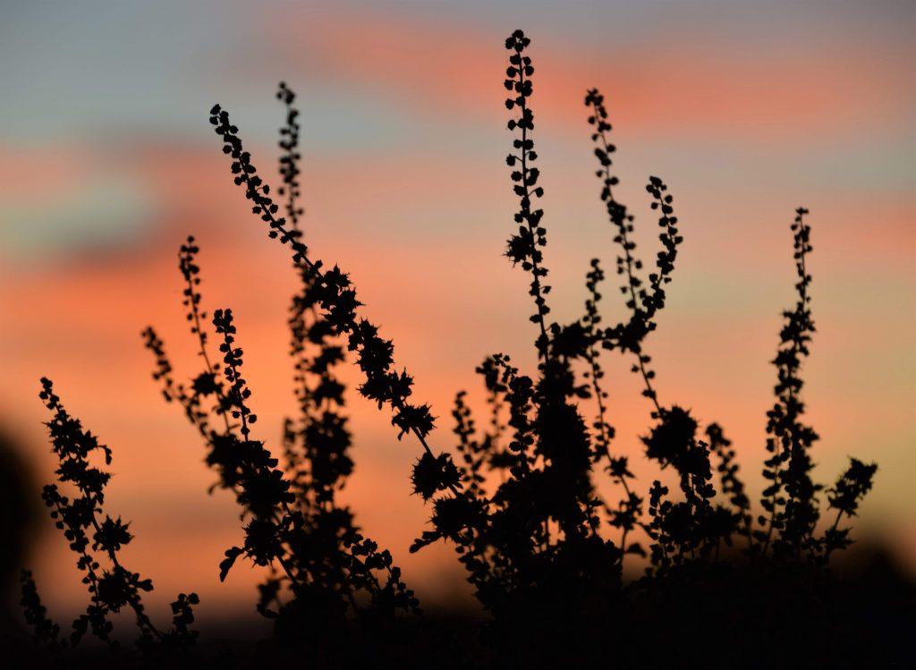 The sun setting during fall in southern California.